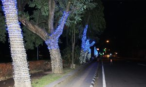 Decorative lamps on trees