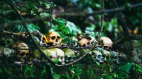 Illustration of skulls at cemetery